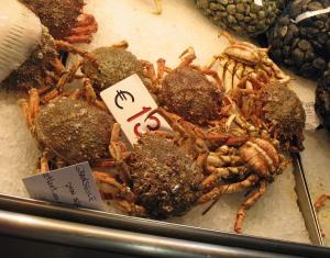 Granseole - Spider Crab