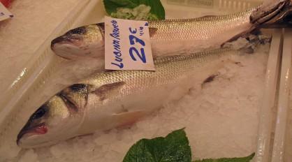 Lubina - Sea bass