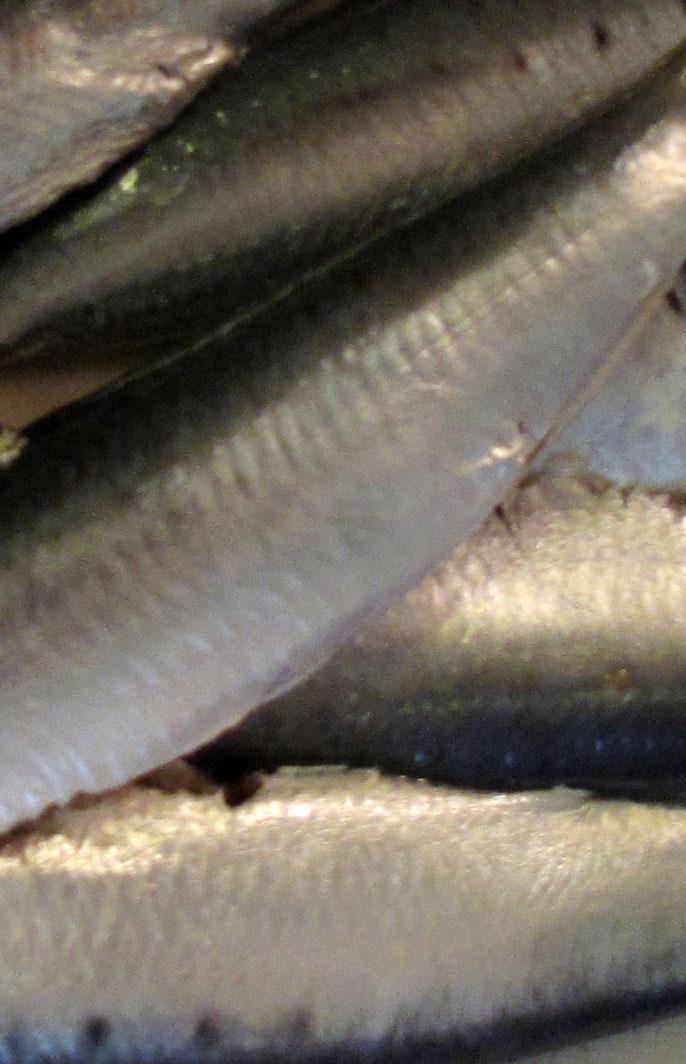 how to prepare fresh sardines