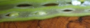 Sliced green bean detail