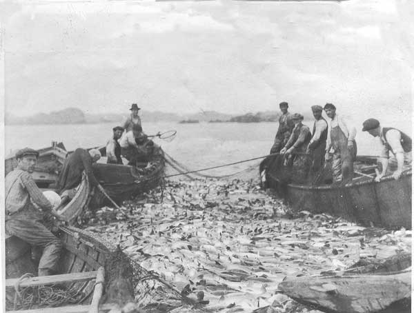 A good haul of cod in 1921 before the entire Grand Banks fishery collapsed...