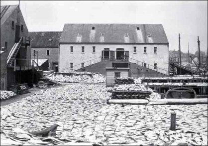 Salt cod drying on a St. John's wharf, pre-1892
