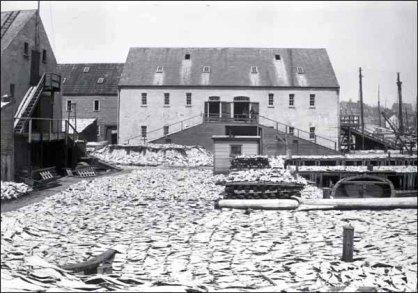 Salt cod drying on a St. John's wharf, pre-1892