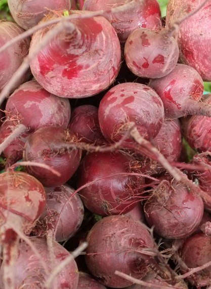 Beetroot from Marathon, Greece