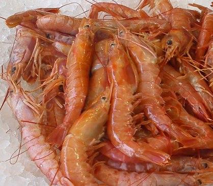 Shrimp from Kranidi, Greece