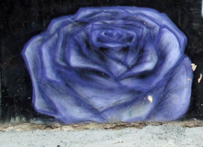 Petralona Dark Rose